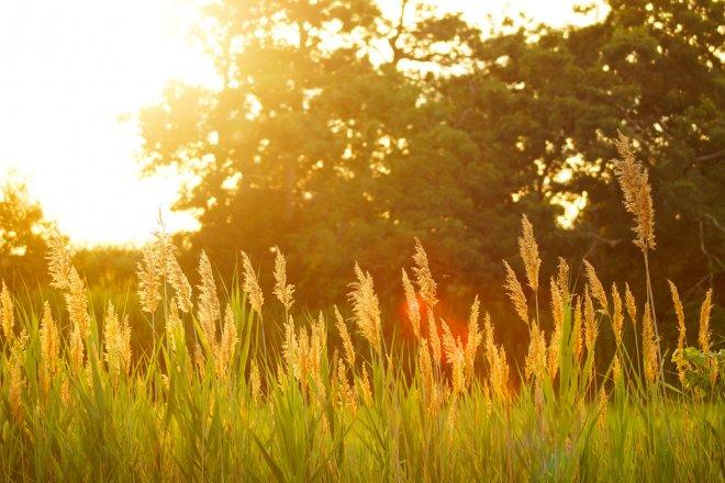 campagne-couche-soleil-champ-prairie-herbes-nature