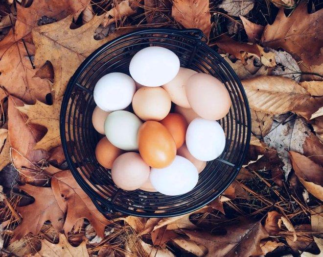 petit-dejeuner-panier-oeufs-frais-feuilles-automne